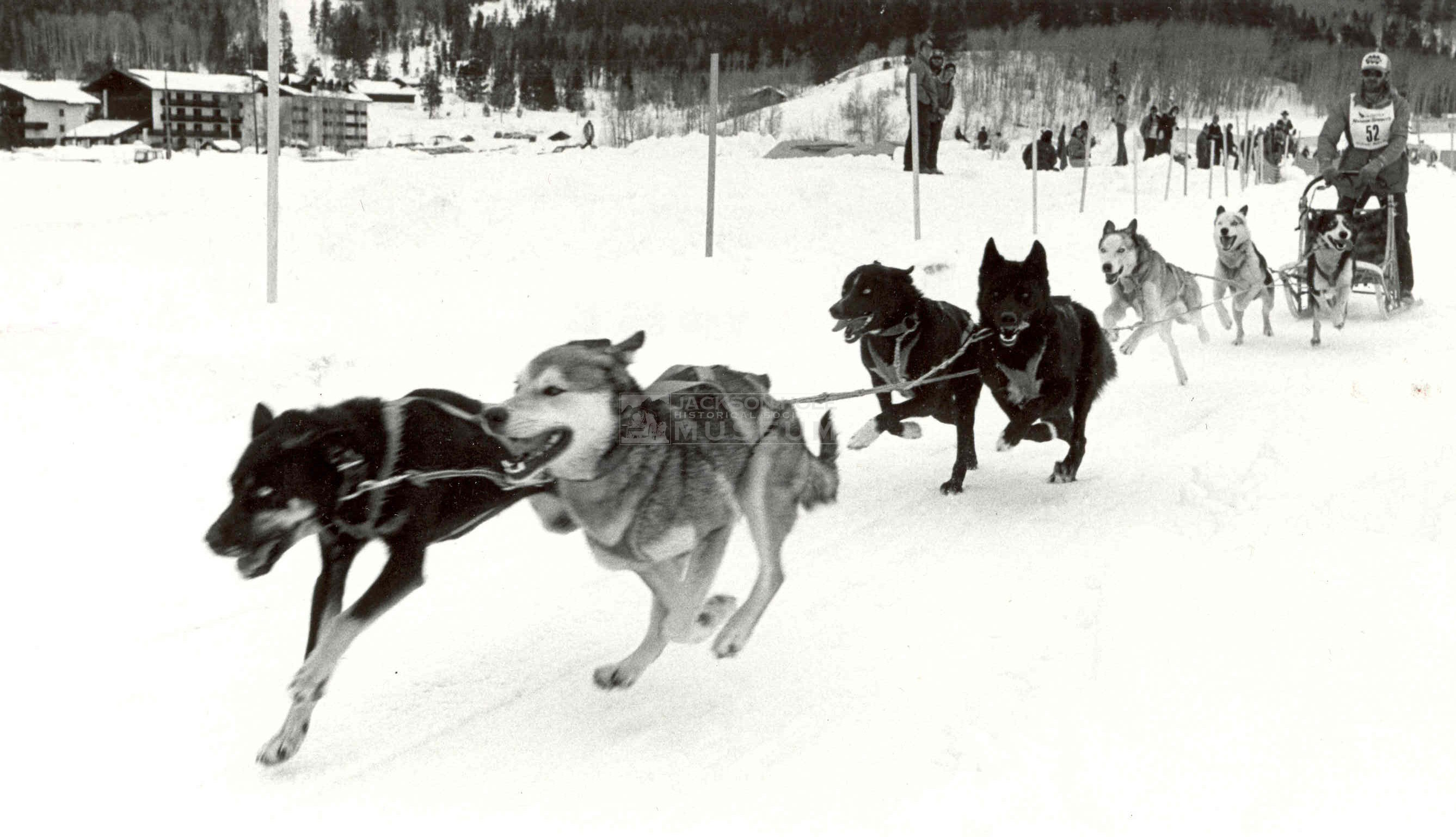 how to train a sled dog team