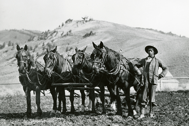 Les Kafferlin plowing on his homestead near Kelly Warm Springs