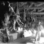 157. Deer curing in shed