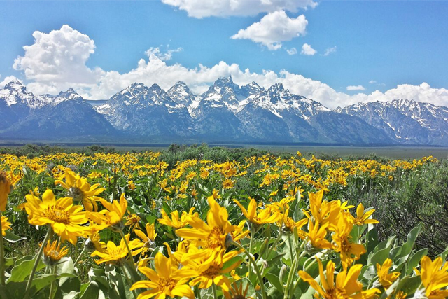 spring-in-the-tetons