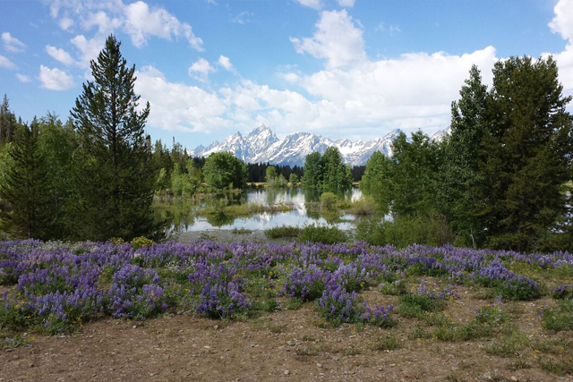 spring-in-the-tetons2
