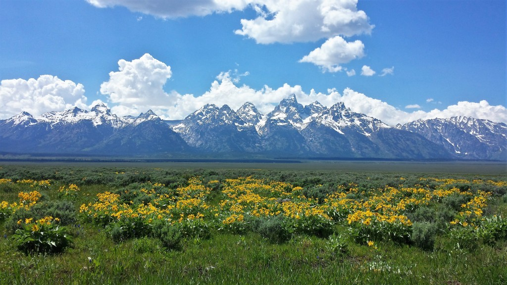 Tetons rising above the valley floor. Photo by Samantha Ford