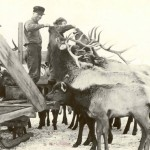 Handfeeding elk. S.N. Leek Collection, American Heritage Center