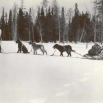 Verba at front with her injured dog in the sled. 1992.4152.001