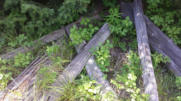 Remains of buck-rail fencing near the Sargent grave site. Photo by Samantha Ford
