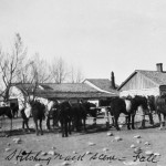Horses In Front of J.K. Store